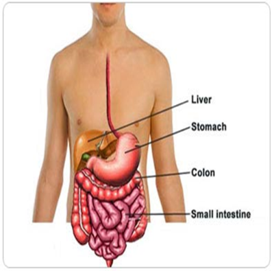 The Digestive Difference