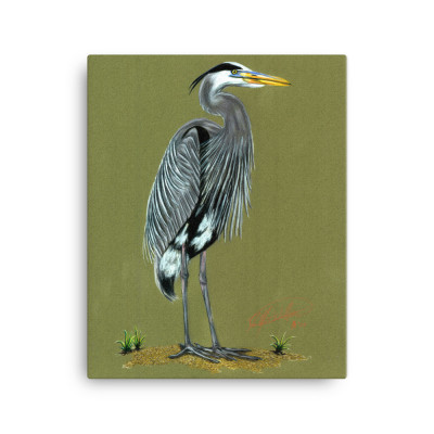 Blue Heron Canvas